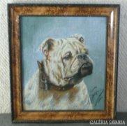 3574 Bulldog portré kutyaportré 1940-ből