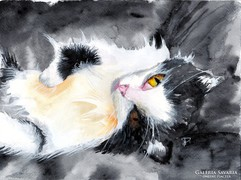 Fekvő cica