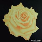 IRMA ENDREY: Peach rose;  ENDREY IRMA: Virág festmény