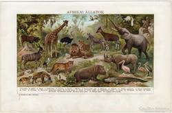 Afrikai állatok, színes nyomat 1912, oroszlán, zsiráf, állat