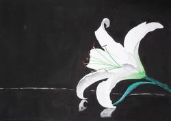 Liliom  - akvarell