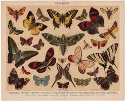 Pillangók, Pallas színes nyomat 1898, eredeti, antik, régi, pillangó, lepke